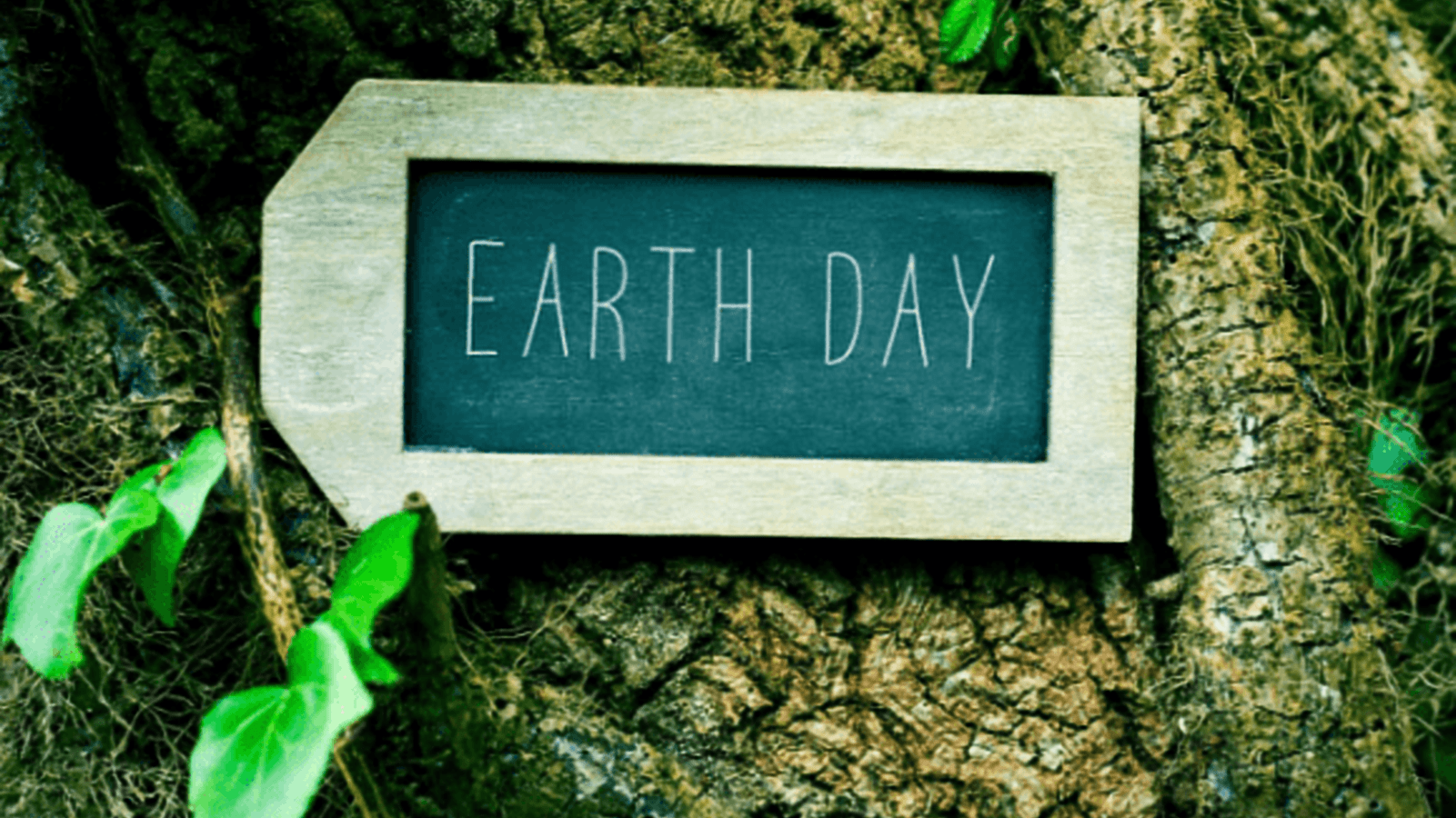 Earth Day – Accoya the eco-friendly way of working with wood
