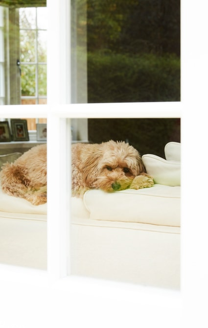 View of dog through Spring Balanced Sash Window