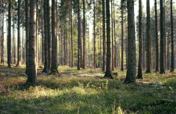 Accoya: Using sustainable wood