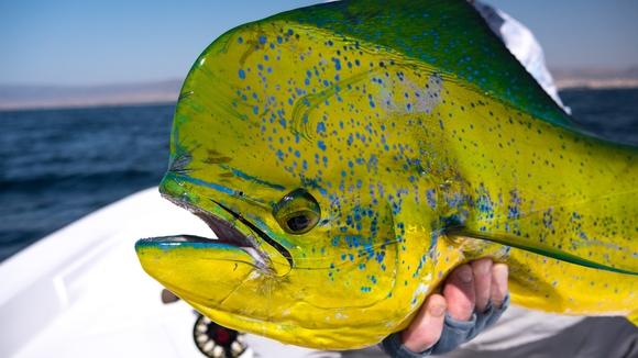 Oman - fish