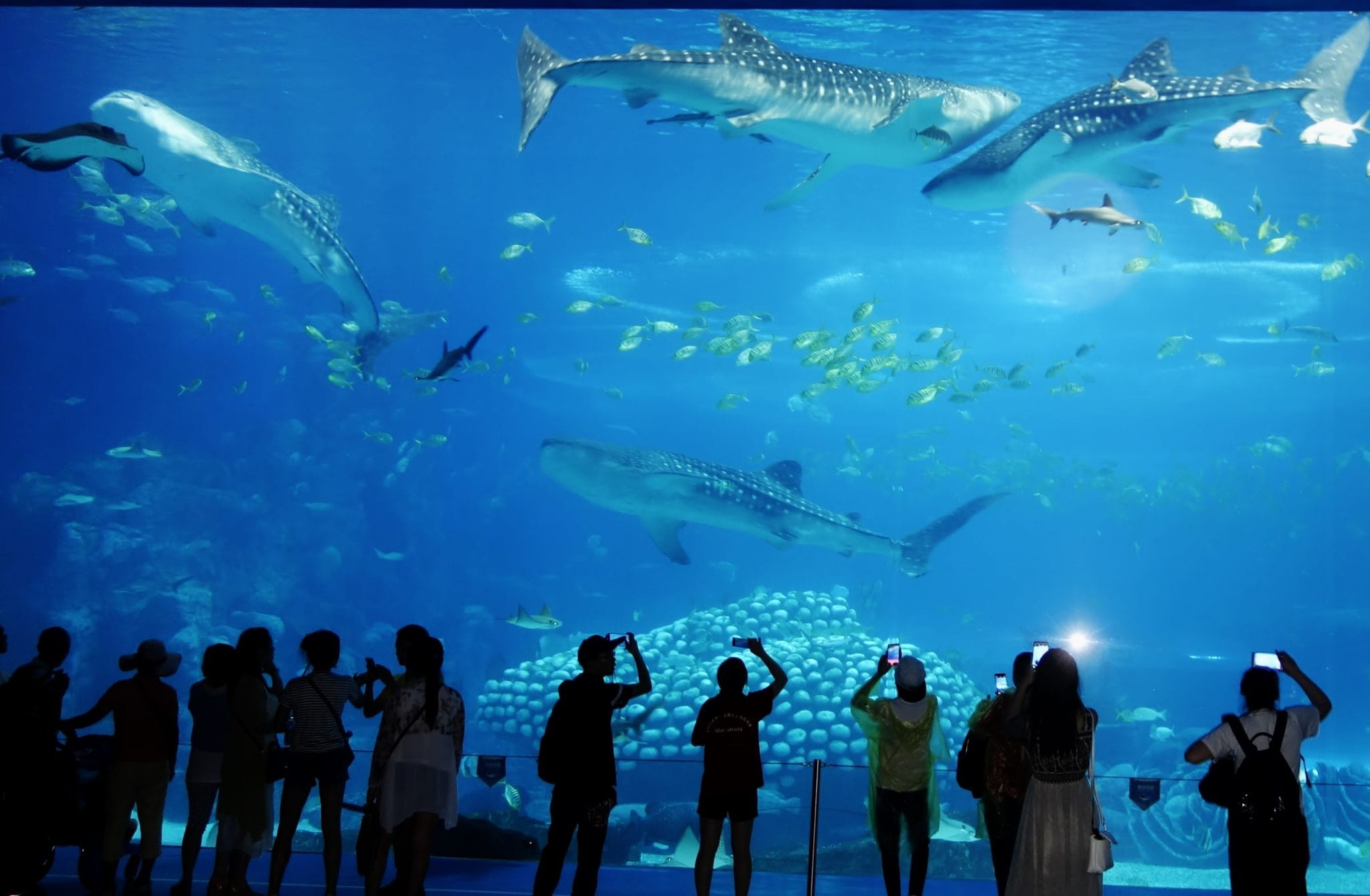 Famous windows - the breath-taking view from the largest aquarium window in the world, China's Hengqin Ocean Kingdom
