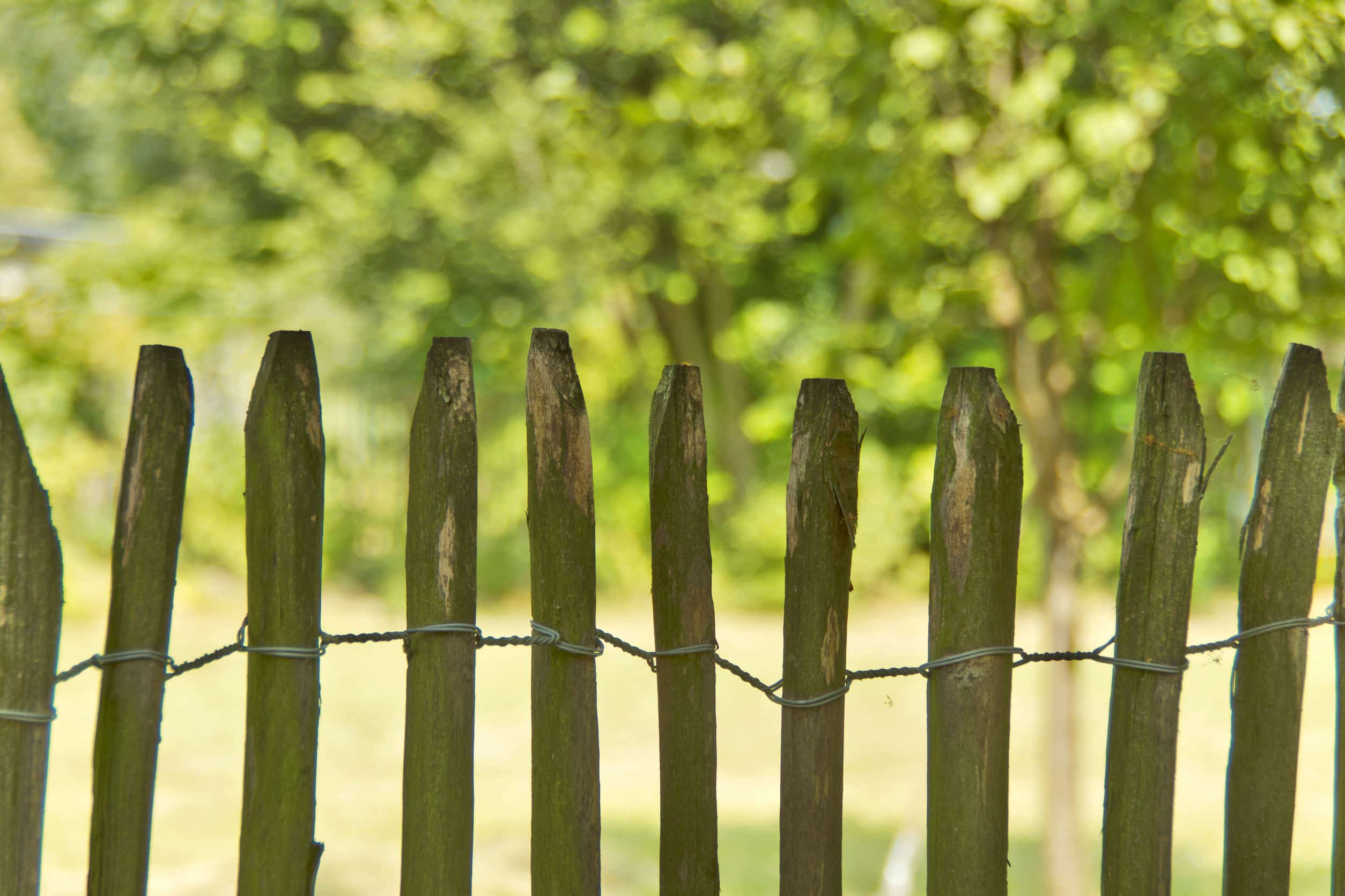 nature fence - a natural fence of sweet chestnut.