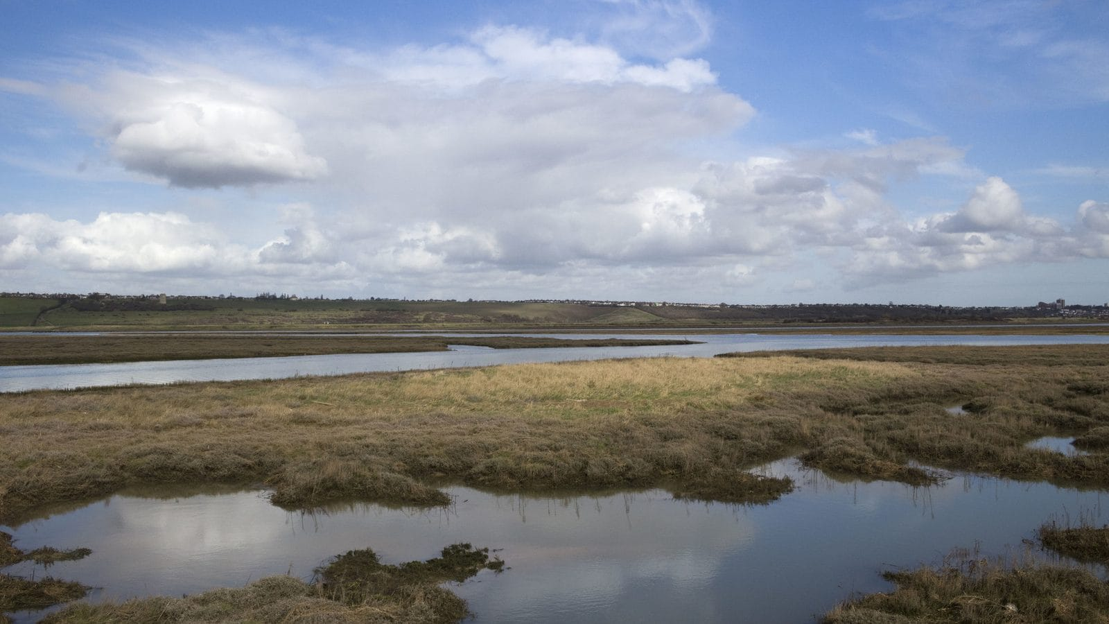 Window to the world: the Essex Marshes