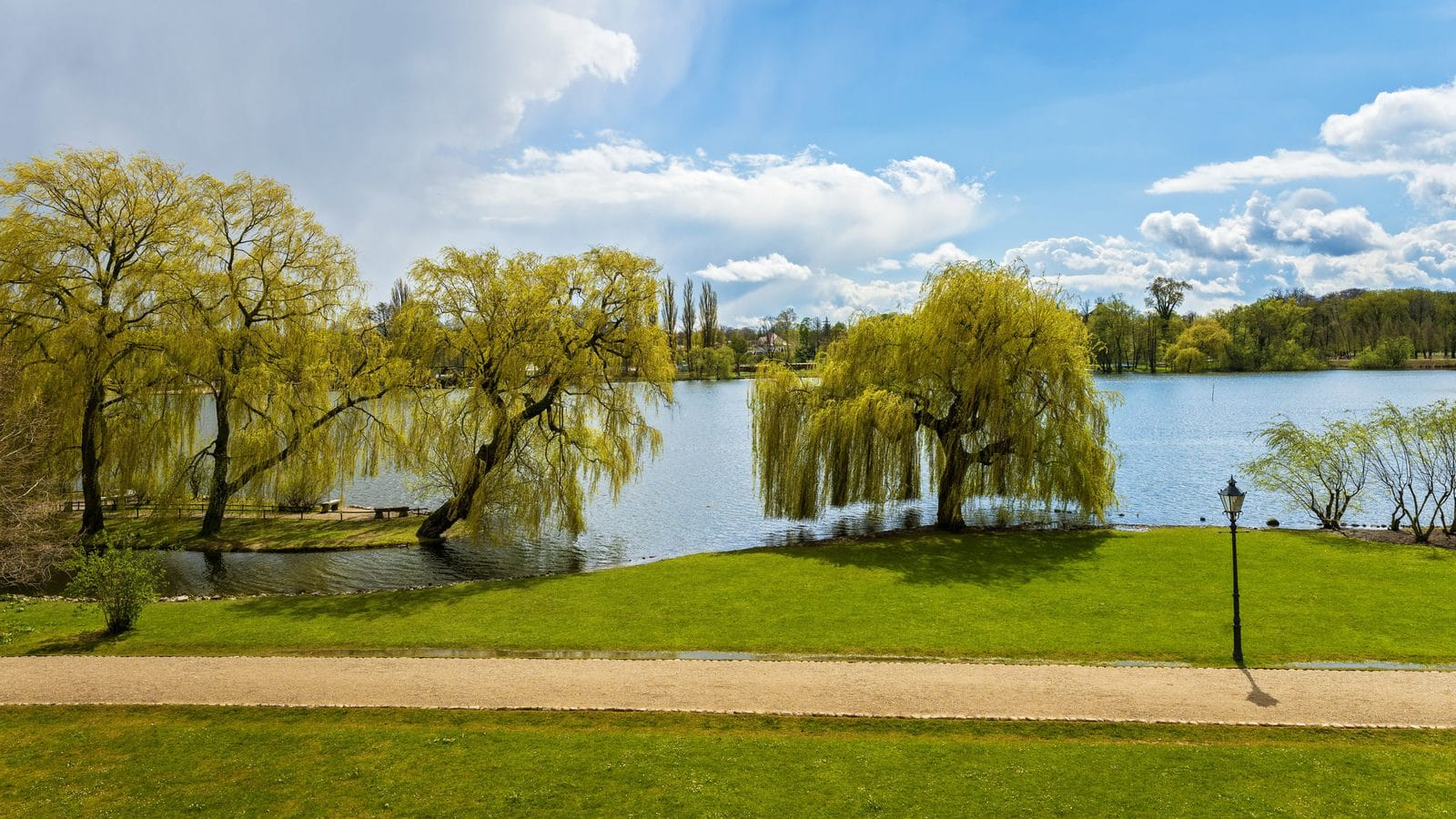Tree of the month: The Golden Weeping Willow