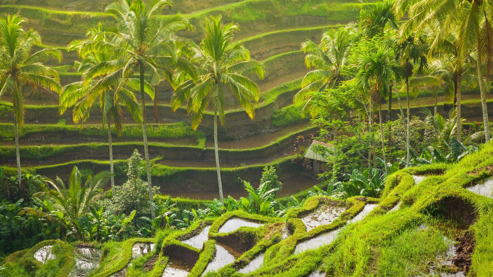 Window to the world: Ubud, Bali